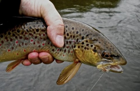 Fly Fishing Guide Adare Ireland
