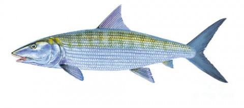 bonefish fly fishing guides