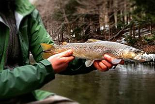Massachusetts Trout